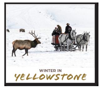 yellowstone.png
